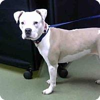 Adopt A Pet :: Kennedy - Sacramento, CA
