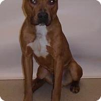 Adopt A Pet :: Cane - Gary, IN