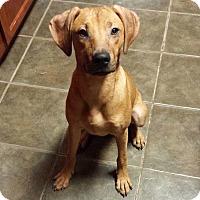 Adopt A Pet :: Kona - Lewisville, IN