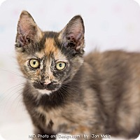 Adopt A Pet :: Natalia - Fountain Hills, AZ