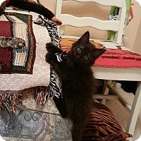 Adopt A Pet :: Talon - Monroe, NC