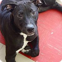 Adopt A Pet :: Bill - Shelter Island, NY