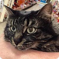 Adopt A Pet :: Zeva - Naperville, IL