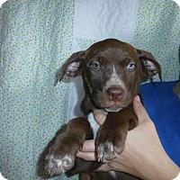 Adopt A Pet :: Spirit - Oviedo, FL