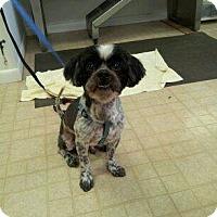 Adopt A Pet :: Bert - Pompano Beach, FL