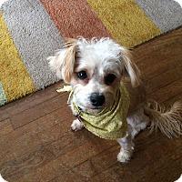 Adopt A Pet :: Henry - Houston, TX