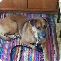 Adopt A Pet :: Chelsea - Franklinville, NJ