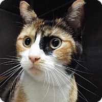 Adopt A Pet :: Snickers - Grants Pass, OR