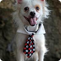 Adopt A Pet :: Ronny - Dalton, GA
