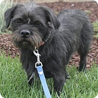 Adopt A Pet :: Buster - Palo Alto, CA