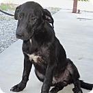 Adopt A Pet :: Ricky
