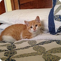 Adopt A Pet :: Soleil - Our Little Sunshine - Ephrata, PA