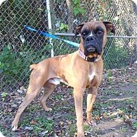 Adopt A Pet :: Buccee - Austin, TX