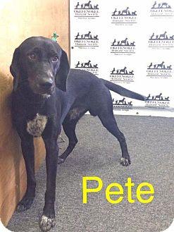 Labrador Retriever/Hound (Unknown Type) Mix Dog for adoption in Waycross, Georgia - Pete