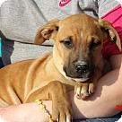 Adopt A Pet :: Thena (14 lb) Pretty Pup!