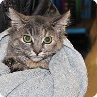 Adopt A Pet :: MANDIE - Las Vegas, NV