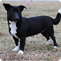 Adopt A Pet :: Charlie - Parsons, KS