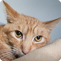 Adopt A Pet :: Bonnie - Redwood City, CA