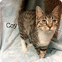Adopt A Pet :: Coy - Foothill Ranch, CA