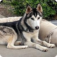 Adopt A Pet :: Echo - Post Falls, ID