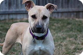 Hound (Unknown Type)/Retriever (Unknown Type) Mix Dog for adoption in Rockaway, New Jersey - Tina Tanner