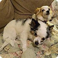 Adopt A Pet :: Hope - Colorado Springs, CO