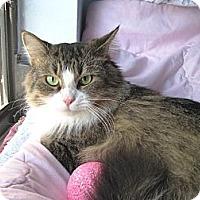 Adopt A Pet :: Diana - Miami, FL