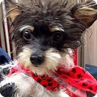 Adopt A Pet :: Ralphie - Green Bay, WI