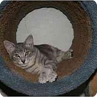 Adopt A Pet :: Silver - La Mesa, CA