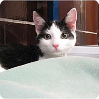 Adopt A Pet :: Sonic - Centerburg, OH