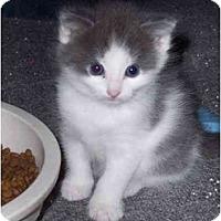 Adopt A Pet :: Alex & Nate - Delmont, PA