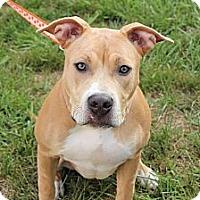 Adopt A Pet :: Sadie - Reisterstown, MD