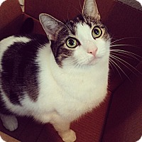 Adopt A Pet :: ATHENA - COURTESY - Los Angeles, CA