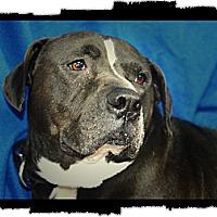 Adopt A Pet :: Buck - Henderson, KY
