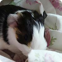 Adopt A Pet :: Garland - Fullerton, CA