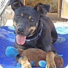 Adopt A Pet :: Monkey Joe