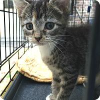 Adopt A Pet :: Zasu Pitts - Brooklyn, NY
