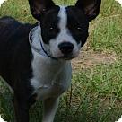Adopt A Pet :: Candace