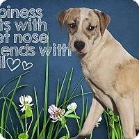 Adopt A Pet :: Rex - West Hartford, CT