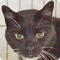 Adopt A Pet :: Grannie - Medford, MA