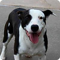 Adopt A Pet :: Batman - Baton Rouge, LA