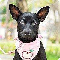 Adopt A Pet :: Rosie - Surrey, BC