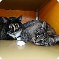 Adopt A Pet :: Snuggles - Elyria, OH