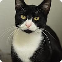 Adopt A Pet :: Mookie161105 - Atlanta, GA