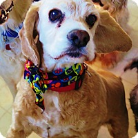 Adopt A Pet :: Honey - Santa Barbara, CA