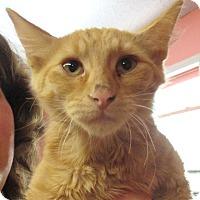 Adopt A Pet :: Sundance - Reeds Spring, MO