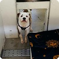 Adopt A Pet :: Milo - Chippewa Falls, WI