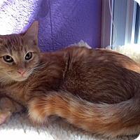 Adopt A Pet :: Tok - Colorado Springs, CO