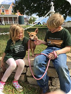 Chihuahua Mix Dog for adoption in Dallas, Texas - Camden