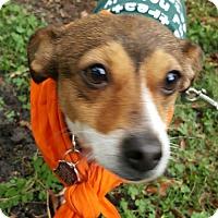 Adopt A Pet :: Nova - Sunnyvale, CA
